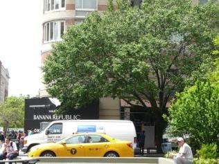 callery-pear-traffic