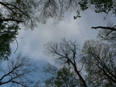 canopy-gap-opening