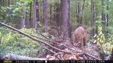 coyote-on-log-3