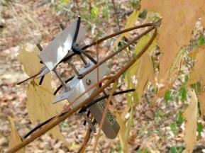 Sensor on maple twig