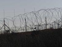 fence-dividing-olive-groves