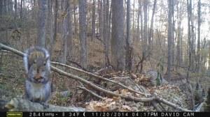 gray-squirrel-on-log