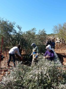 harvesting-near-jenin