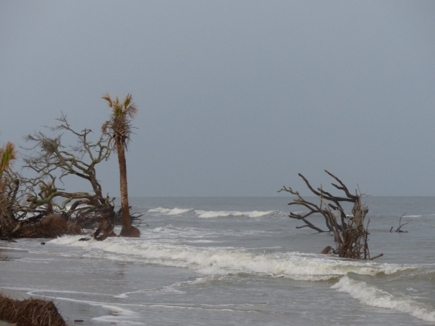 high-tide-pushing-into-skeleton-trees