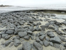 marsh-mud-exposed-by-beach-erosion