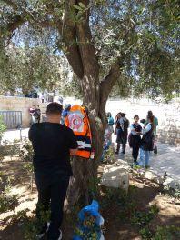 medics-use-tree-before-protest