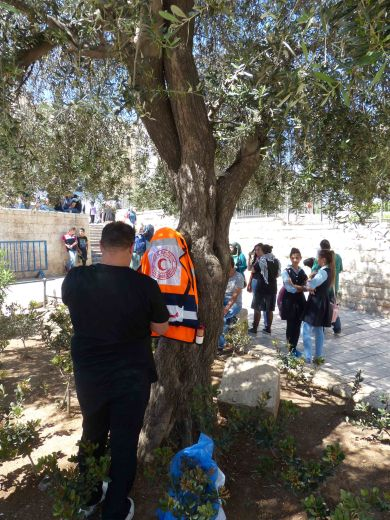 medics-use-tree-before-protest