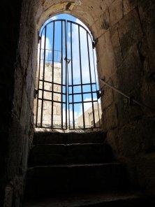 no-barrier-to-cats-under-jerusalem