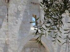 olive-tree-next-to-damscus-gate-3