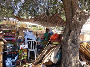olive-tree-next-to-damscus-gate-4