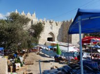 olive-tree-next-to-damscus-gate-6