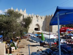 olive-tree-next-to-damscus-gate-6