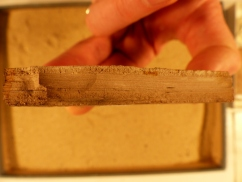 paper-shale-from-florissant-at-yale-peabody-museum-copy