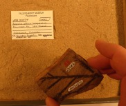 redwood-fossil-from-florissant-at-yale-peabody-museum-copy