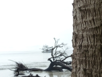 sabal-palm-trunk-looking-at-shrimping-boat-and-skeleton-trees