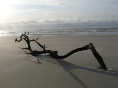 skeleton-trees-or-bone-yard