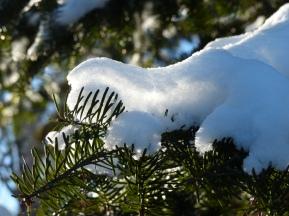 snow-in-needles