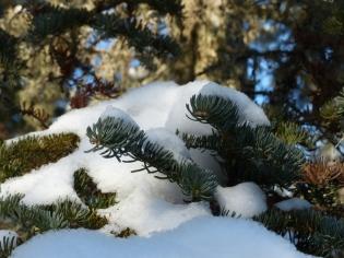 snow-load
