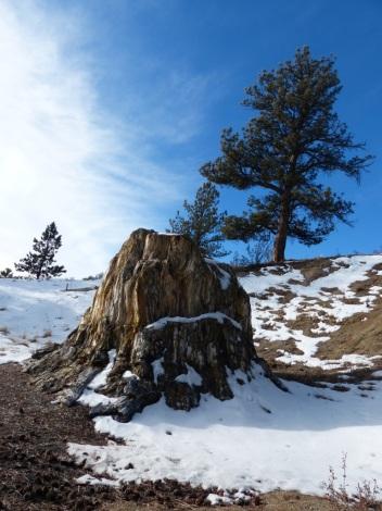 the-big-stump-2