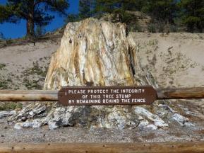 the-big-stump-3