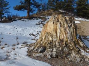 the-big-stump