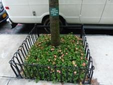 tree-guard-example-4