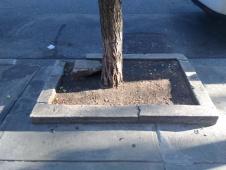 tree-guard-example-5