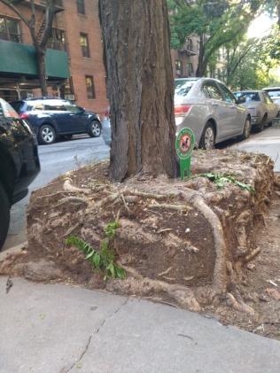 tree-guard-example-6