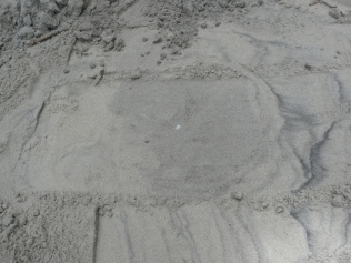 turtle-nest-chamber-exposed-by-digging
