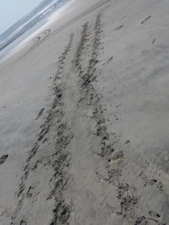 turtle-tracks