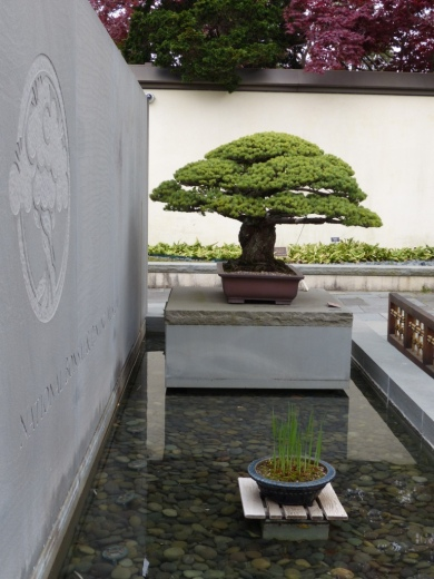 yamaki-pine-in-washington-dc-6