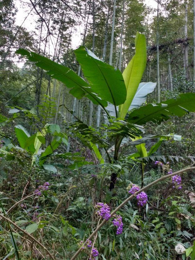 Botanical confluence: subtropics meets the temperate zone.
