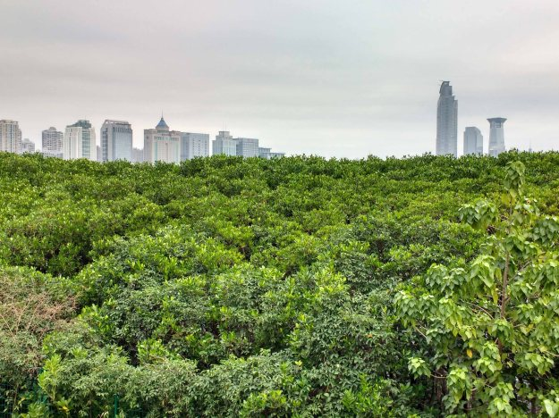 Part of the skyline of Shenzhen, seen through mangroves on the bay that separates the city from Hong Kong.
