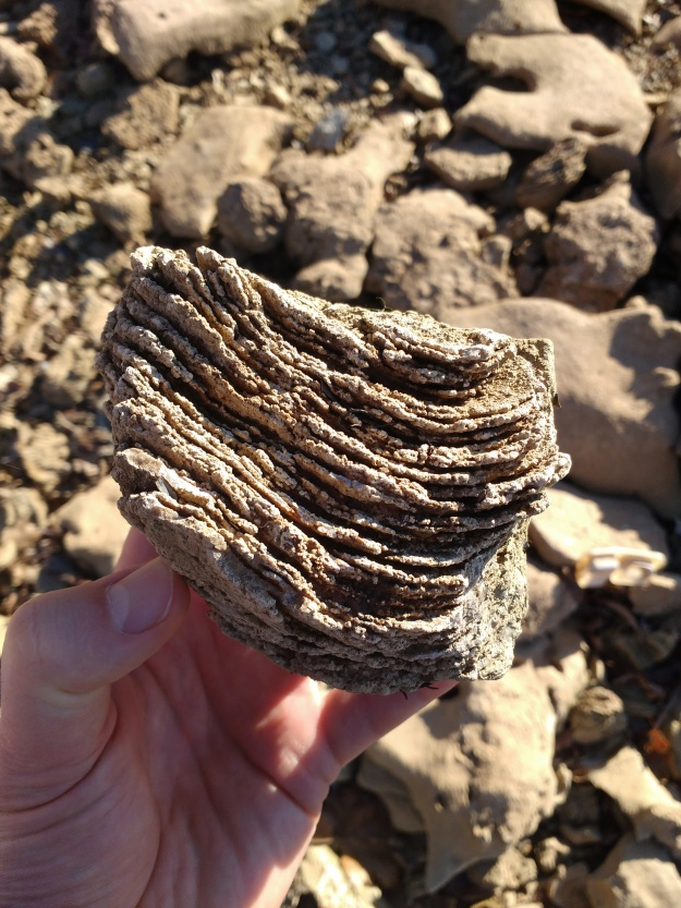 This stack is, I think, the remains of a stromatolite, a layered community of bacteria and bacteria-like cells.